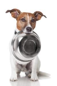 sulten hund holder sin madskaal i munden 200x300